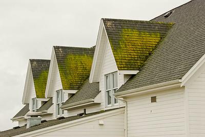 Moss on Village Roof