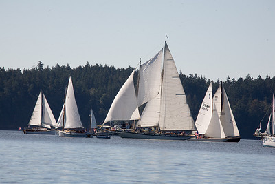 Orcas has two wooden boat races every Summer. This is the one for sailing boats.