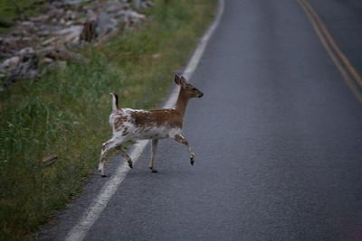 "In bred deer often sport ""unsafe colors""."
