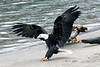 landing_each_MG_5125_8_by_12
