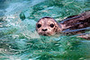 seal_pup_MG_0151_12x18