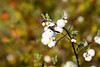wet_white_berries_002_6x9
