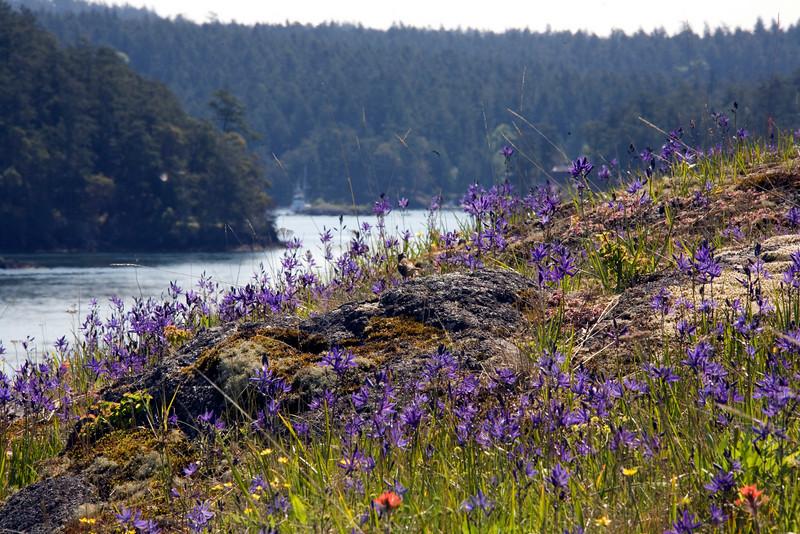 purple_rock_0343_12x18
