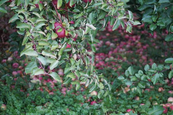 Orchard Cross     Oct 2015