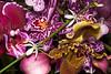 Orchid Bouquet 4/20/2008