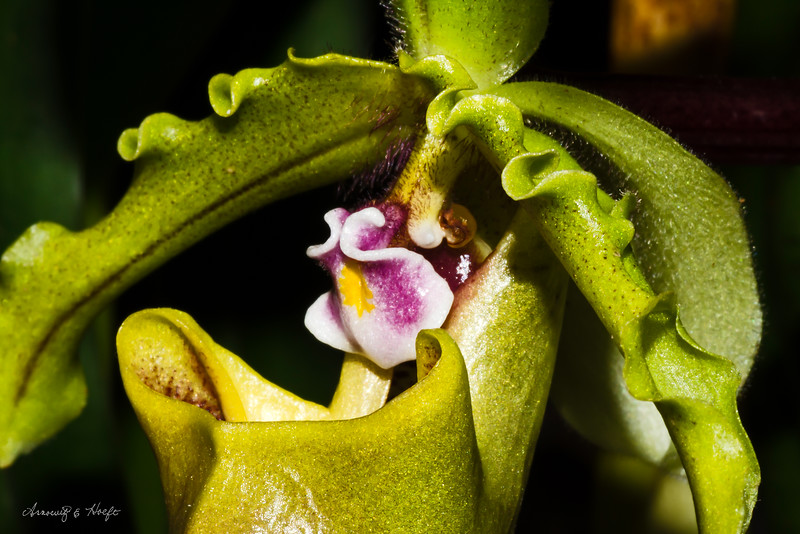 Orchid 11/3/2014