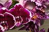 Orchids  4/13/2008
