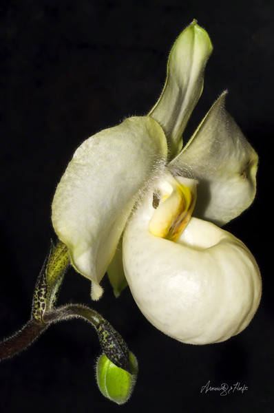 Orchid 6/18/2014