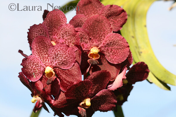 Orchids August 2007