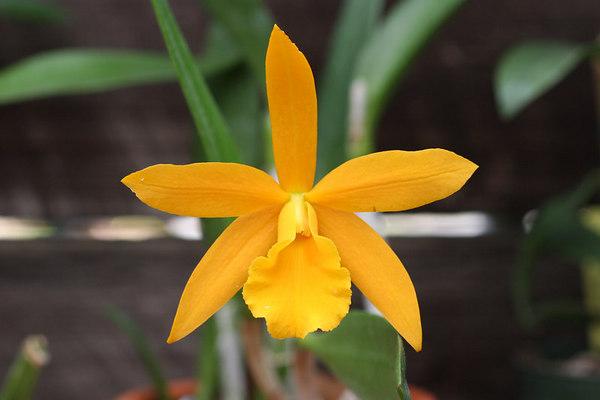 Orchids Dec 29th thru Jan 1st