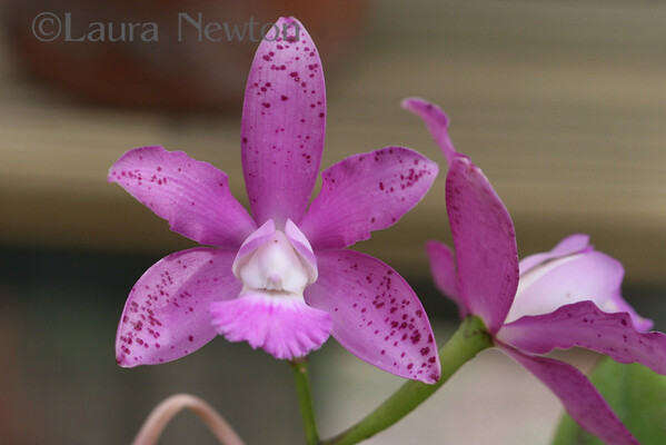 Orchids July 2007