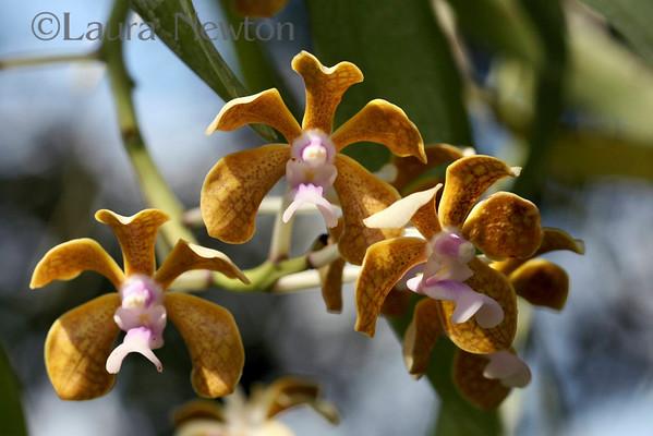 Orchids September 2007