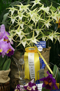 IMG_1764 WOC-Orchids