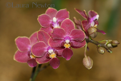 IMG_1806 WOC-Orchids
