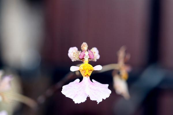 Orchids 6.12.2007