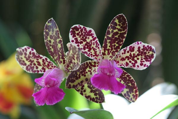 Orchids 9/19/2006
