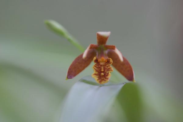 Orchids September 2006