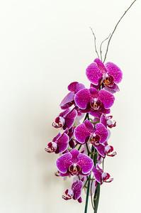 Orchids 7-8-14