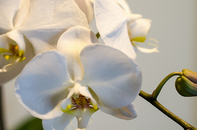 Orchids and buds, single exposure