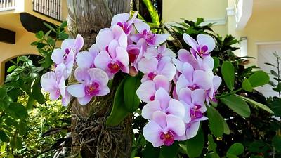 Sheila's  Orchids