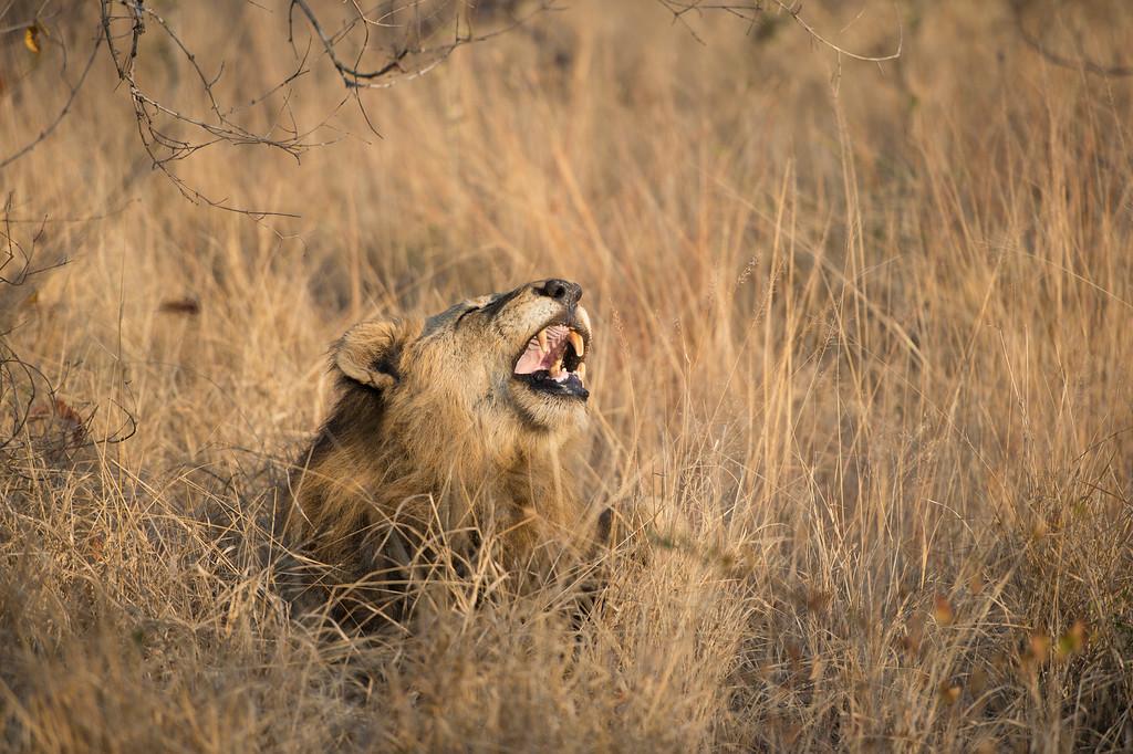 Laughing or Yawning :)
