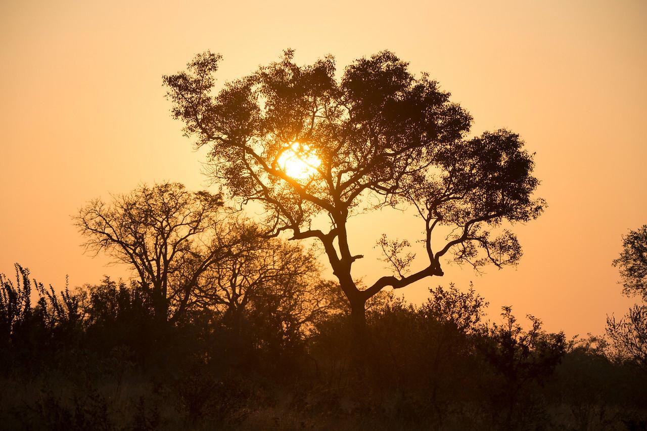 Sunrise in Sabi Sabi South Africa
