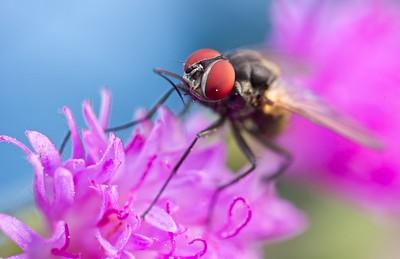 Fly feeding on flowers