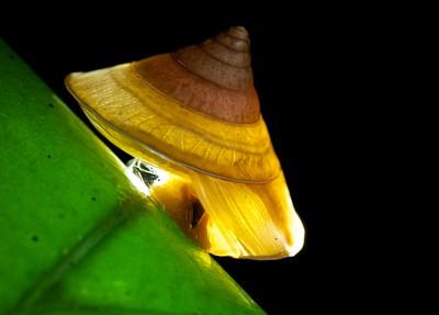 Backlit snail