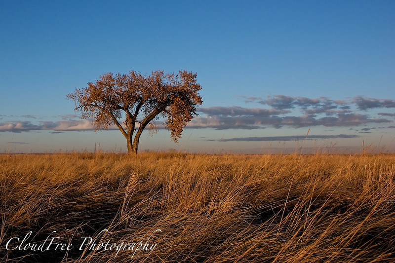 Tree at sunset, Fossil Creek Reservoir, Fort Collins 2010