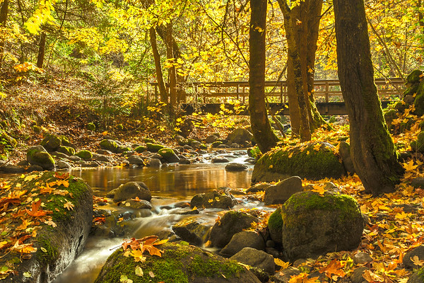 Ashland Creek in the Fall, Lithia Park, Ashland, OR