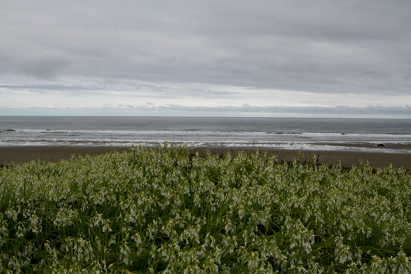 Oregon coast - Spring flowers blooming on the beach, Bandon