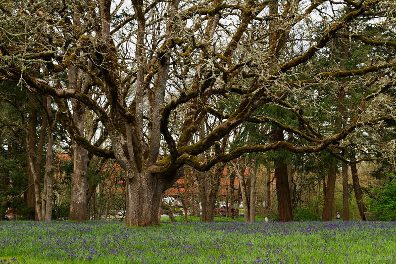 Willamette Forest, Salem Oregon