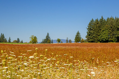 Field between Eagle Creek and Barton, Oregon.