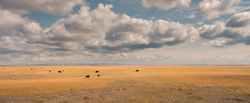 Grasslands Of Oregon