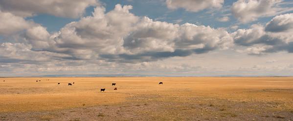 Grasslands Of Oregon