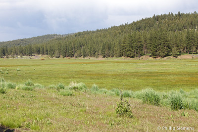 Meadow along Ochoco Creek