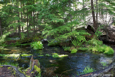 Headwaters of Jack Creek