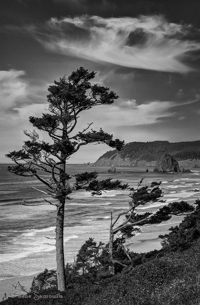 10-10-13 Wind Swept Tree with Haystack Rock in the background<br /> Canon Beach, Oregon