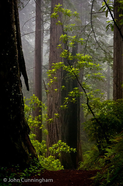 Solitude - Jedediah Smith Redwoods Preserve, California - John Cunningham - June 2012