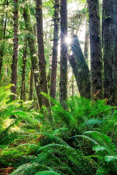 Ecola State Park ~ Oregon