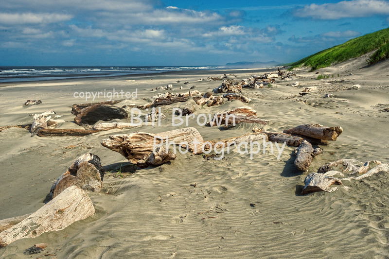 Driftwood  Scattered on Beach