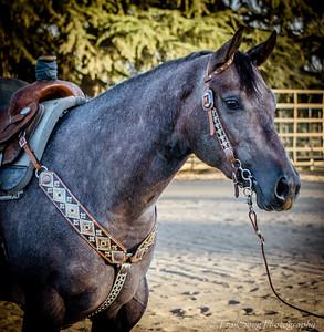 Oregon Gold Open Horse Show