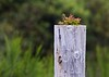 Life On A Post