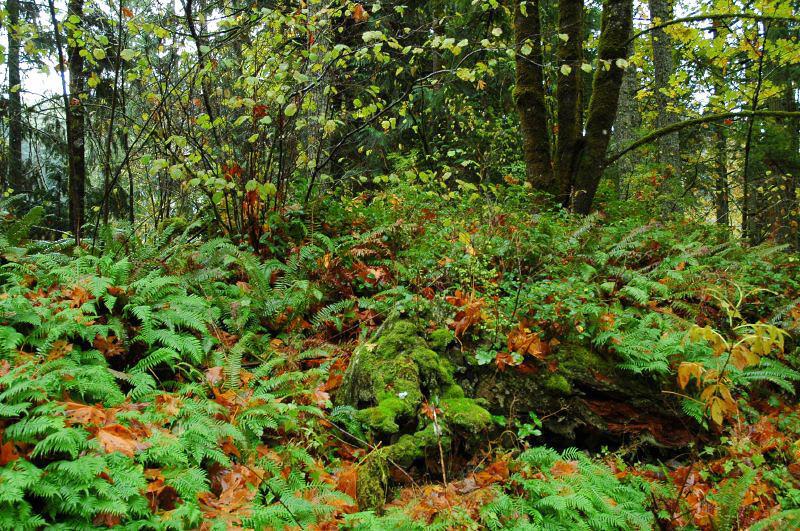 Ferns & Moss