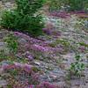 Flowers in Cinder