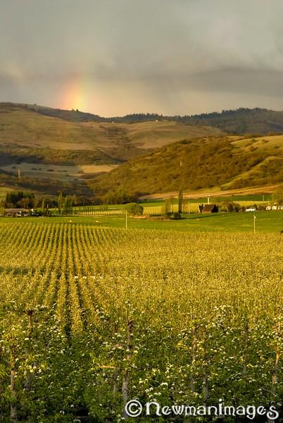 Orchard Rainbow