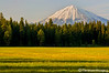 Mt. McLoughlin Looming Over a Spring Meadow 2