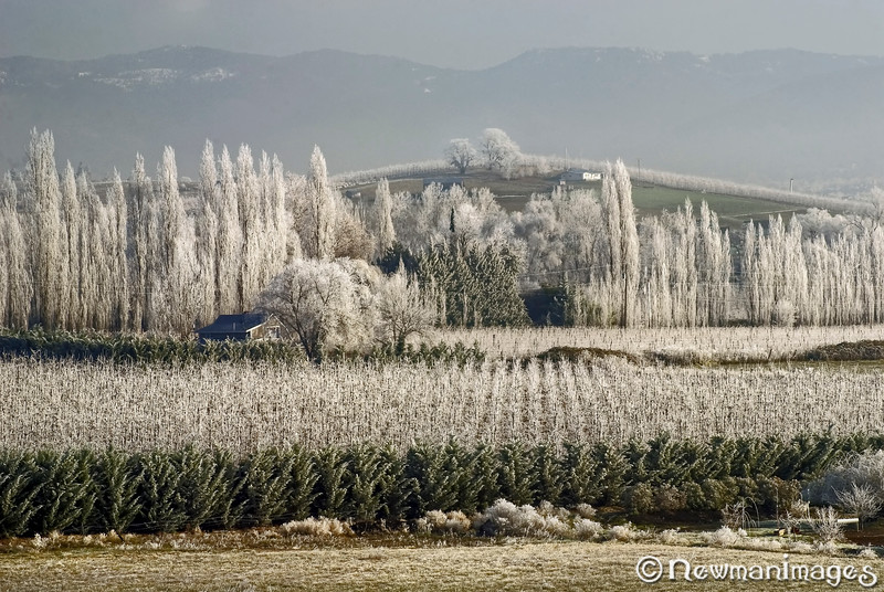 Icy Orchard