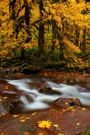 Table Rock Creek with autumn foliage, vertical