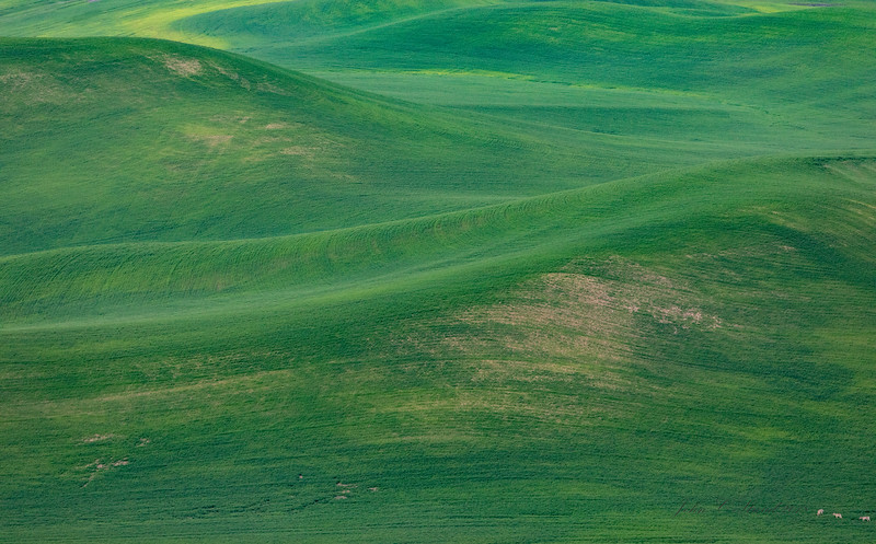Palouse Farming - see the deer in lower right?